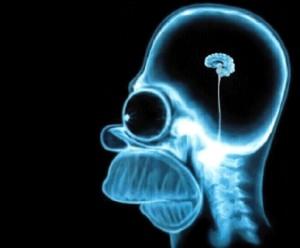 cervello_homer