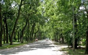 albero_città